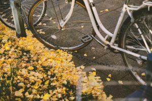 自転車とコスモス
