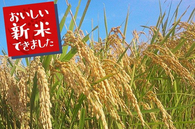 茨城県龍ヶ崎市のおいしいお米のふるさと納税返礼品をご紹介します。