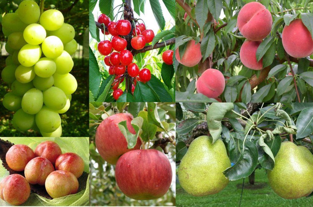 山形県東根市の最高のフルーツを使ったふるさと納税返礼品をご紹介します。