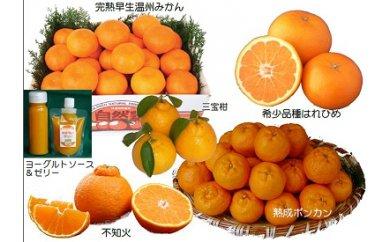 三重県熊野市のおいしい「みかん」を使ったふるさと納税返礼品をご紹介します。