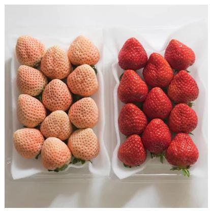 2つの色と味わいが楽しめる!紅白いちご2パック(あまおう&あわゆき)