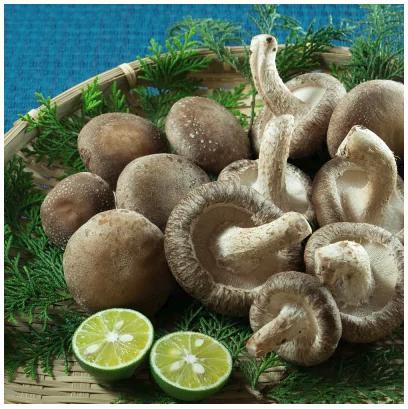 菌種と豊かな自然の中で育てることにこだわった岡本さんちの生しいたけ(200g×4袋)