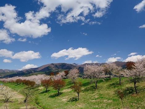 飯山市の春