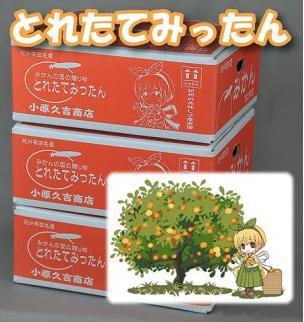 みかんの国の贈り物有田みかん9kg