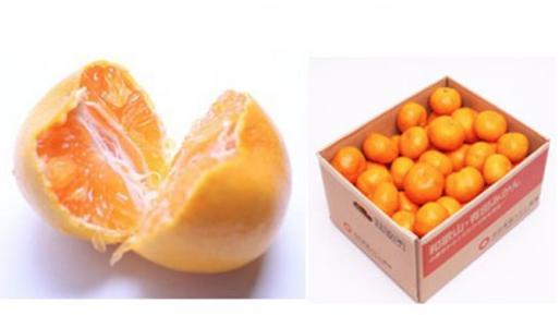 【特別栽培】特選有田みかん 5kg