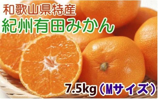 【厳選・産直】紀州有田みかん7.5kg(Mサイズ・赤秀)