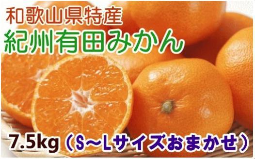 【厳選・産直】紀州有田みかん7.5kg(S~Lサイズ・赤秀)