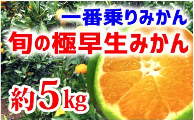 【極早生みかん】旬の極早生5kg