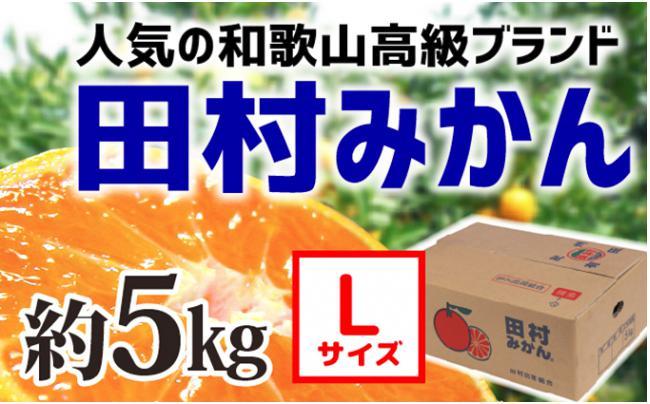 【和歌山ブランド】人気の田村みかん 5kg(Lサイズ)