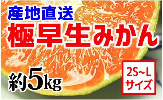 【産地直送】有田みかん(極早生品種) 約5kg(2S~L)