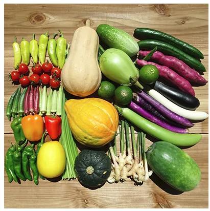 南国高知より まごころ野菜セット【よりどり】(高知県須崎市)