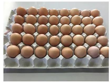 芦沢養鶏場おすすめ ひまわりたまご(40個程度)