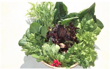 ★有機栽培★サガンベジの超安心・安全「葉物・野菜セット」【新鮮採れ たて】