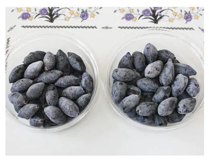 厚真産ハスカップ「ゆうしげ」(250g)・「あつまみらい」(250g)食べ比べセット