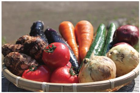 UIC名水うきはの無農薬減農薬お野菜セットS