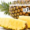 【ふるさと納税】自宅で沖縄気分を味わおう!!沖縄のおすすめ返礼品